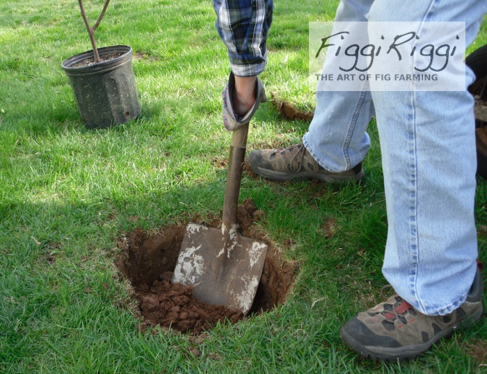 Digging hole with spade shovel