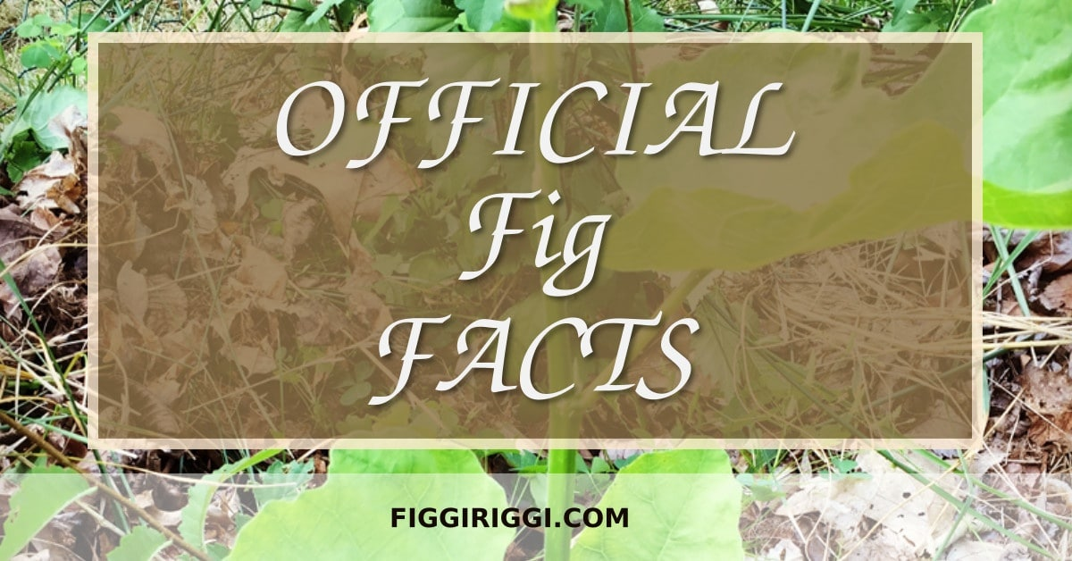 OFFICIAL FIG FACTS