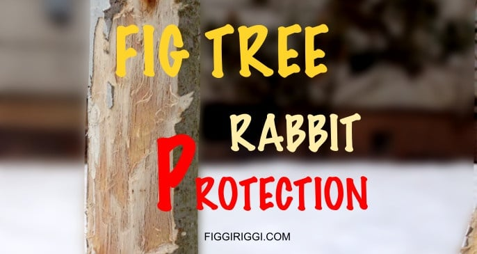Rabbit Protection