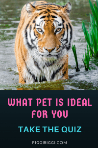 quiz: WHAT PET IS IDEAL tall (1)