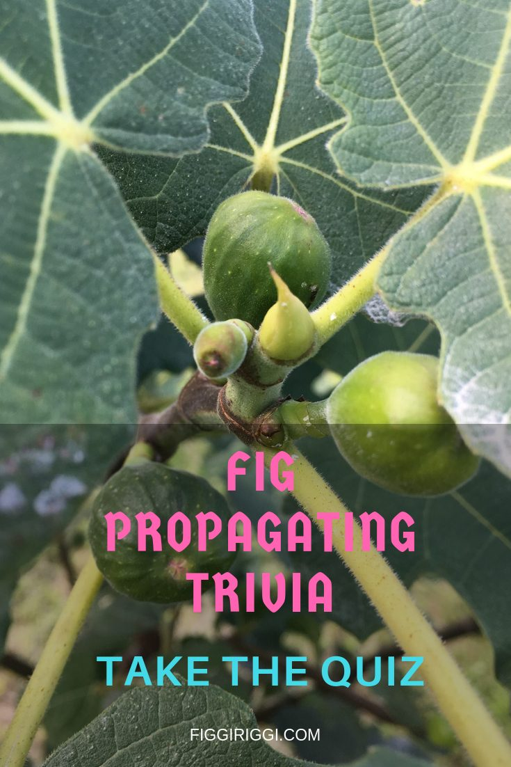 A photo of figs and propagating trivia quiz title