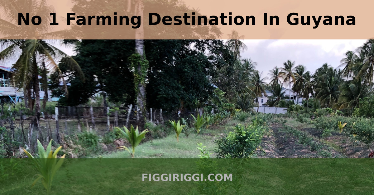 No 1 Farming Destination In Guyana