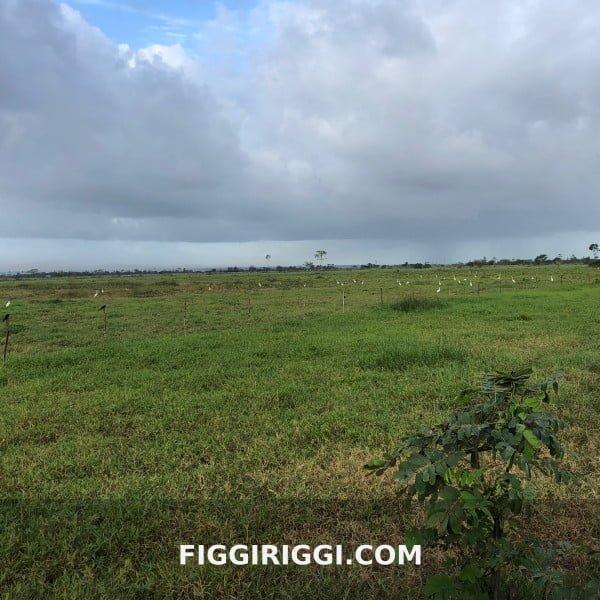 No 1 Farming Destination In Guyana